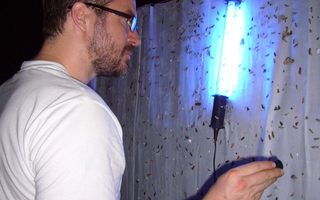Insects are attracted by light. In order to get a better picture of the beetle biodiversity on the island La Réunion, white sheets were hung up and illuminated with black light. The attracted beetles were caught and described later in the lab. Photo: Matthias Herrmann / Max Planck Institute for Developmental Biology.