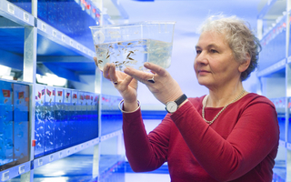 Christiane Nüsslein-Volhard looking at a fish tank containing zebra fish (Danio rerio). Photo: L'Oréal / Max-Planck-Institut for Developmental Biology