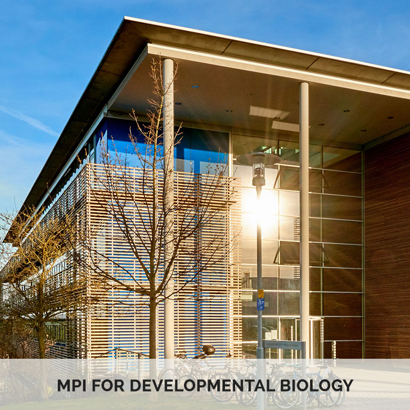 MPI for Developmental Biology