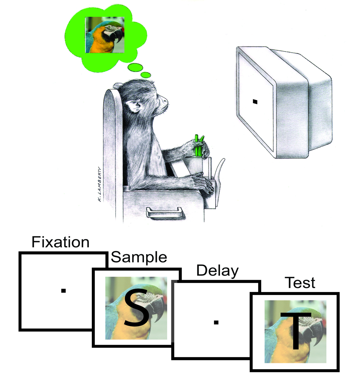 A monkey is performing a classical visual memory task: an image was shown to the animal. After a brief interval the animals were either shown the same image again or a different one and had to indicate whether the second image was the same as the first one. Graphic: Stefanie Liebe, Max Planck Institute for Biological Cybernetics