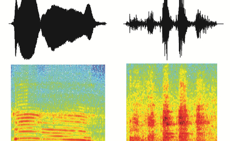 Two rhesus monkey calls (top: sound amplitude over time; bottom: energy for each frequency over time). Illustration: Catherine Perrodin/MPI for Biological Cybernetics.